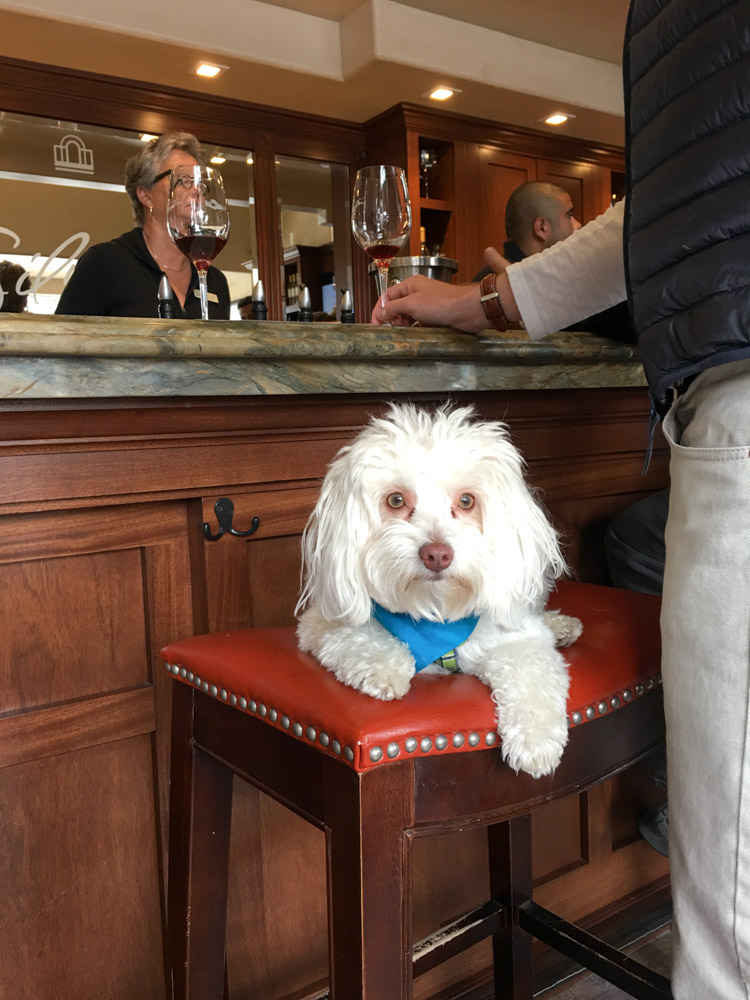 Rudy in a tasting room in Carmel-by-the-Sea by A Lady Goes West