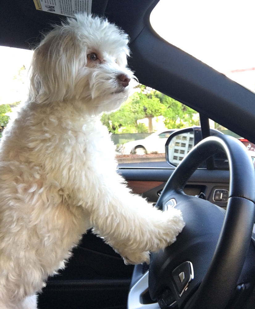 Rudy driving the car by A Lady Goes West