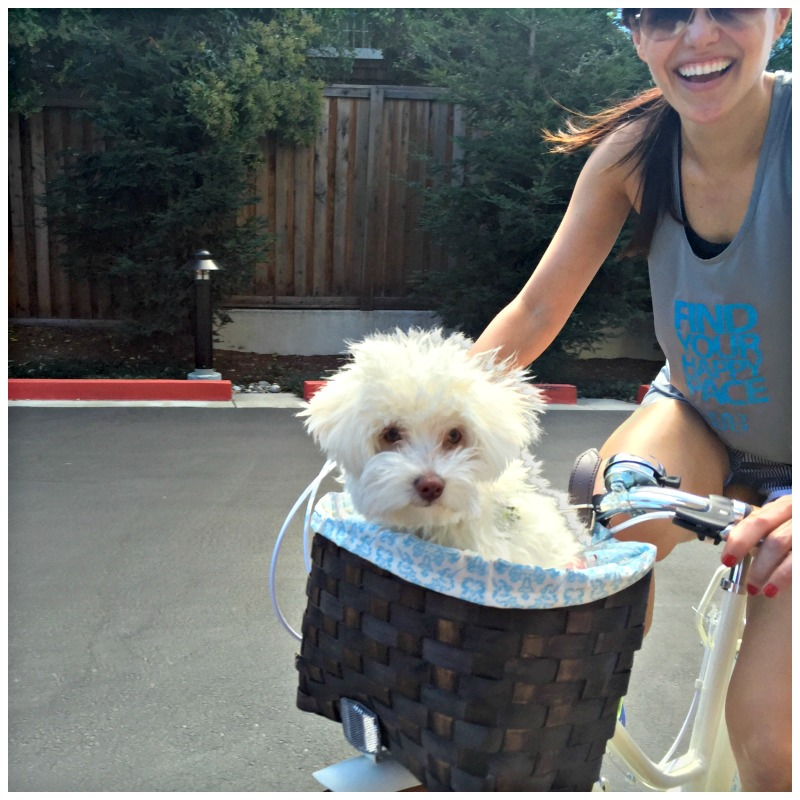 Rudy in my bike basket via A Lady Goes West
