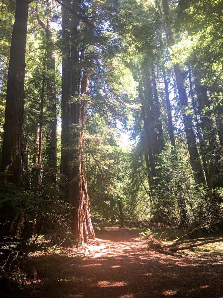 Muir Woods beauty by A Lady Goes West