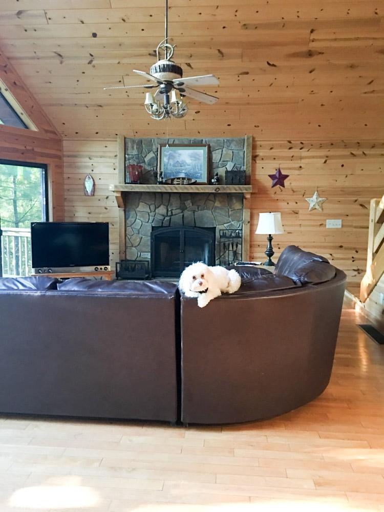 Rudy in cabin in Blue Ridge Georgia