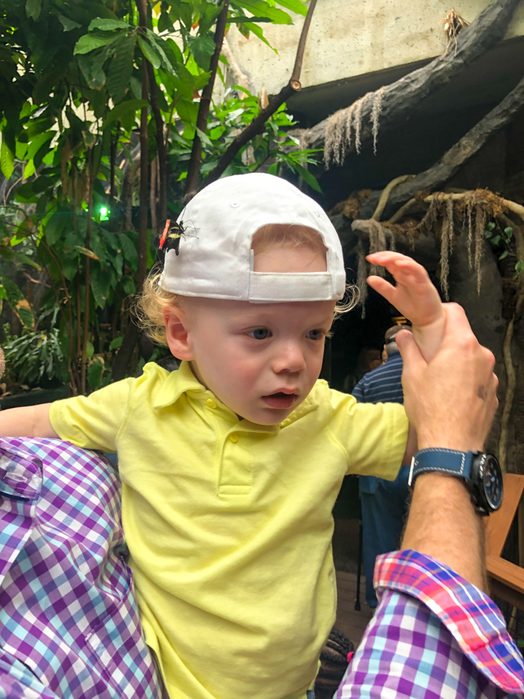 Butterfly on Brady's head at the Vancouver Aquarium by A Lady Goes West - July 2019