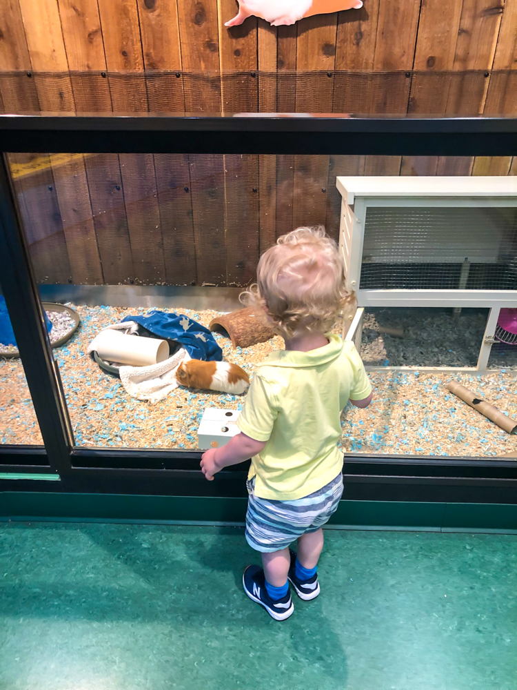 Brady at Lindsay Wildlife Museum - by A Lady Goes West -- September 2019