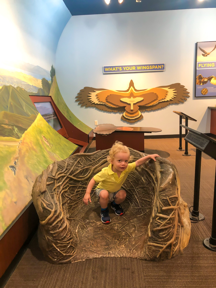 Brady at Lindsay Wildlife Museum in Walnut Creek - by A Lady Goes West -- September 2019