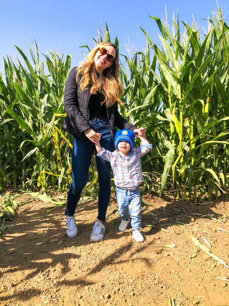 Corn maze by A Lady Goes West -- October 2019
