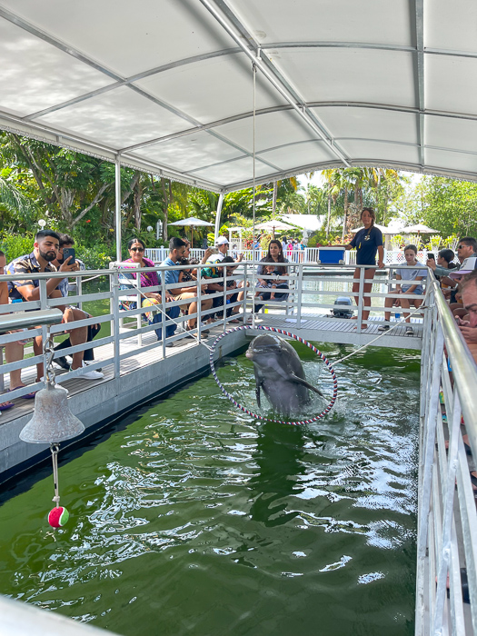 Dolphin at Theater of the Sea in Islamorada by A Lady Goes West