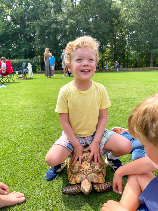 Brady on a turtle by A Lady Goes West